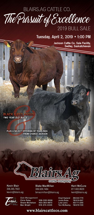 Blairs Ag Cattle Company | RED ANGUS & BLACK ANGUS BULL SALE